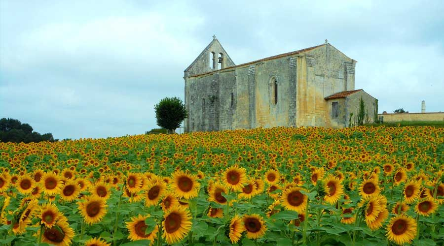 Saintonge-church-sunflower-fields